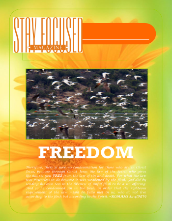 Stay Focused Poster - Freedom